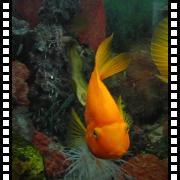 Рыбная жизнь в ресторане