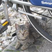 Австрия-2009. Altmunster. Рыбная грильница. Кот