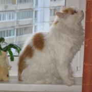 Обрастающий кот